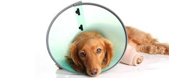 dog daycare perth