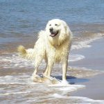 Dog Training Perth | Holistic Paws = Waggy Tails