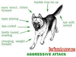 Dog Aggressive Attack | Holistic Paws = Waggy Tails