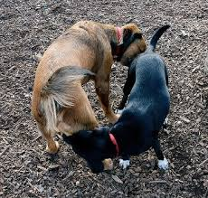Butt Sniffing   Holistic Paws = Waggy Tails