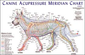 Animal Kinesiology Perth | Holistic Paws = Waggy Tails