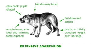 Defensive Aggression | Holistic Paws = Waggy Tails