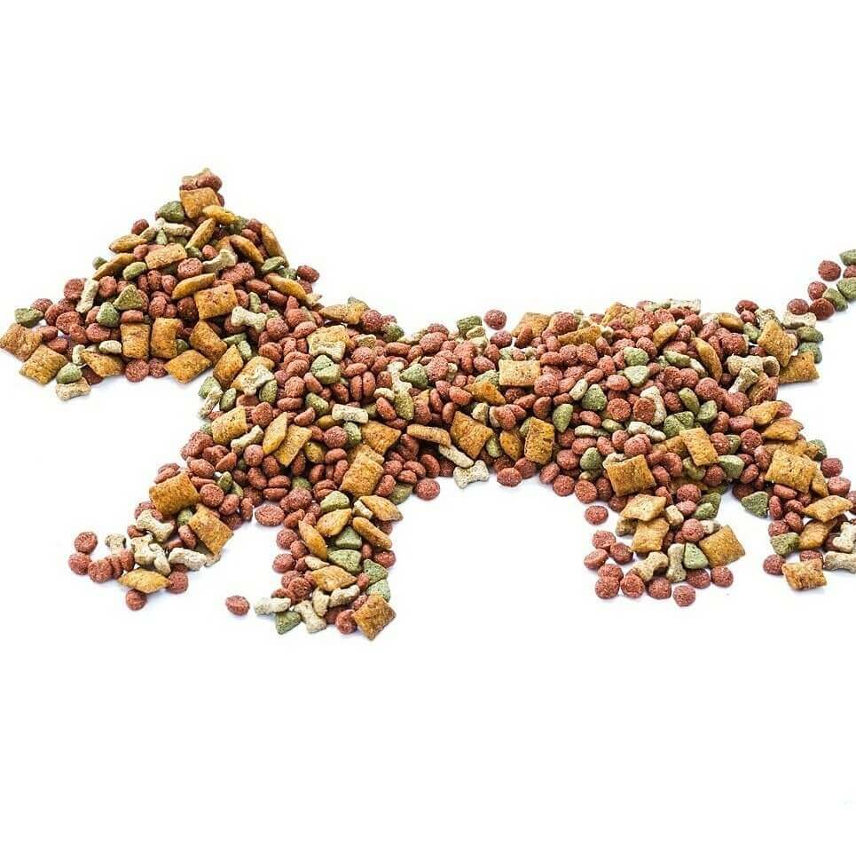 Dog Dry Food   Holistic Paws = Waggy Tails