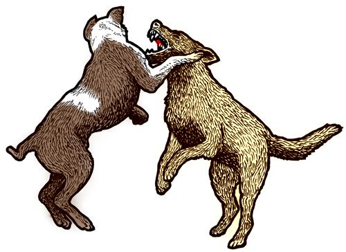 Dog Fight Training | Holistic Paws = Waggy Tails