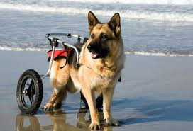 Dog Wheel Chair | Holistic Paws = Waggy Tails