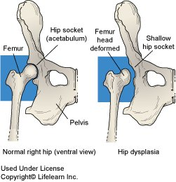 Hip Dysplasia | Holistic Paws = Waggy Tails