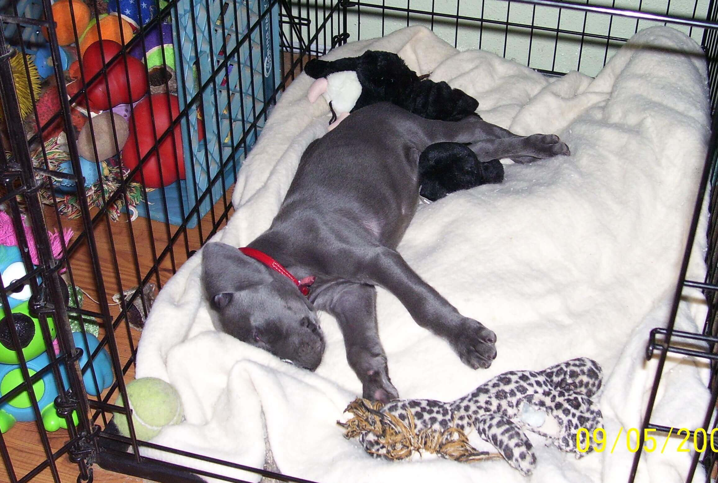 Puppy Crate Training | Holistic Paws = Waggy Tails