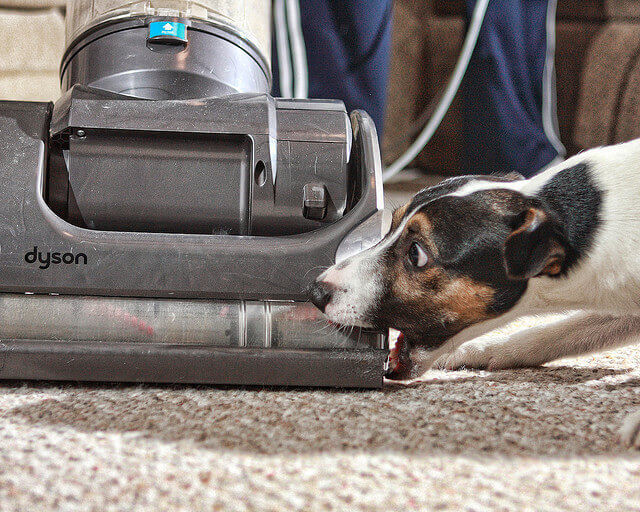 Does Your Dog Attack the Vacuum?