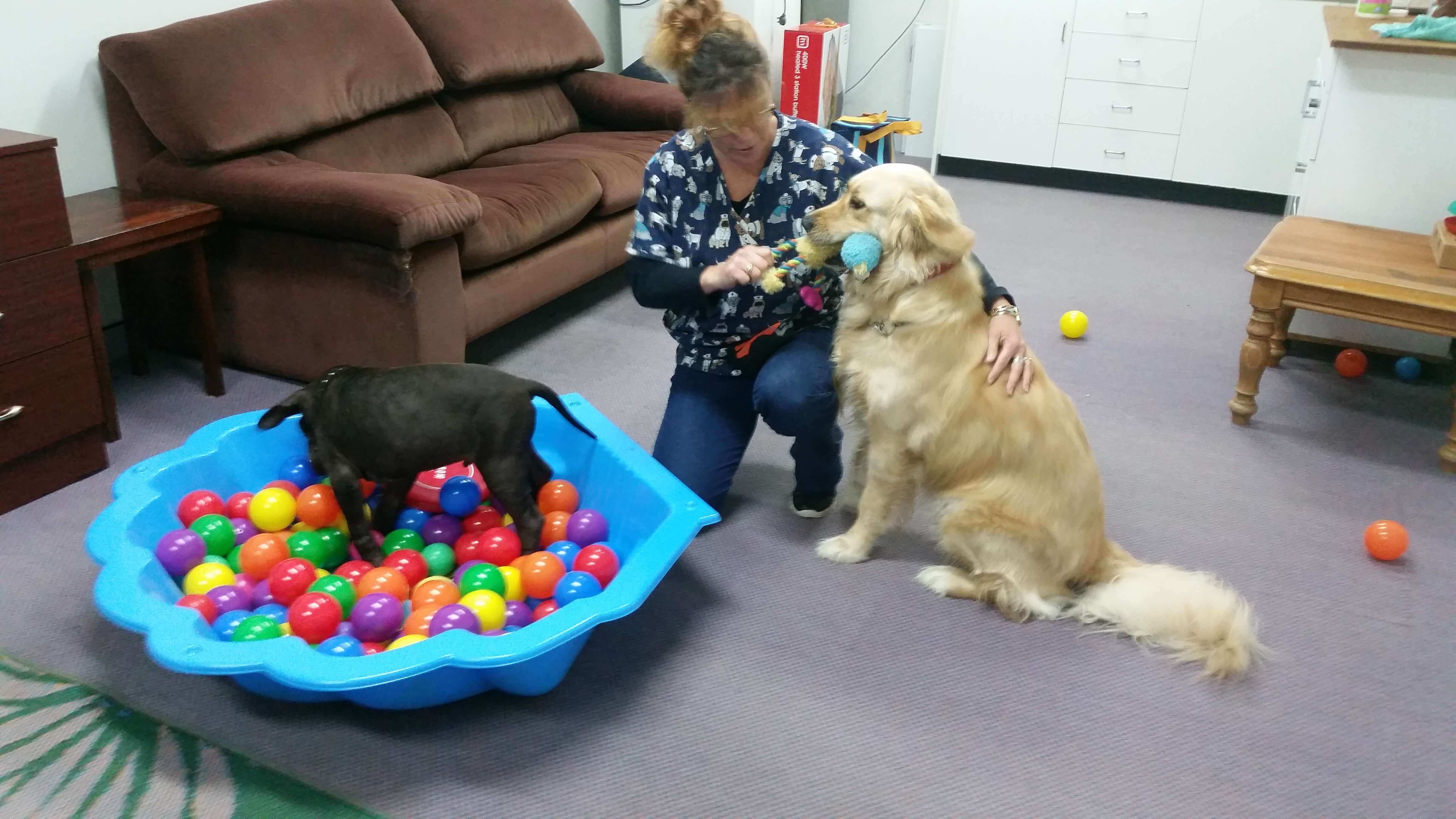Dog Socialisation   Holistic Paws = Waggy Tails