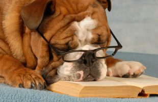 english bulldog wearing eyeglasses sleeping over a good novel